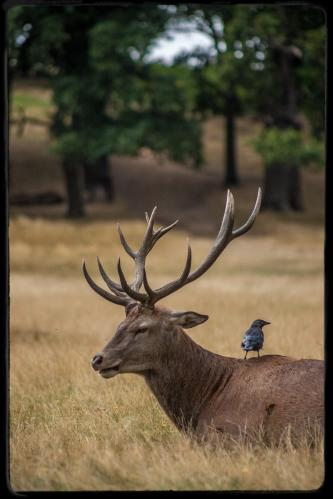 richmondpark5