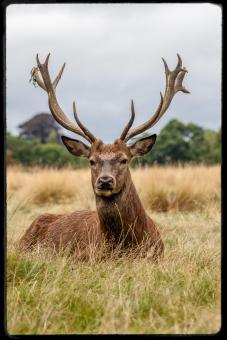 richmondpark6
